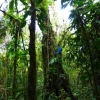 Puerto Lopez_Hiking_Jungle