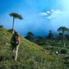 chile_paul-sharpe_arocaria-forest