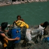 tibet_burros_mekong